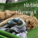 National Hammock Day – YA Reads to Enjoy in Your Hammock